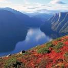 fjordi