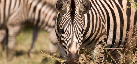 Dienvidāfrika
